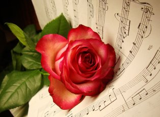 musical-rose