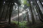 bosco-piccolo